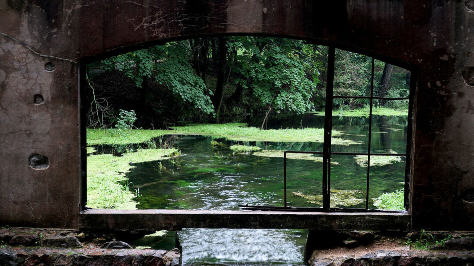 Abandoned Arch Architecture Built Structure Damaged Day Deterioration Forest Growth Land Nature No People Obsolete Old Outdoors Plant Reflection Tree Water Window