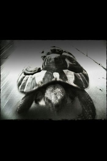 Gym-y the turtle:b qt!!!:D
