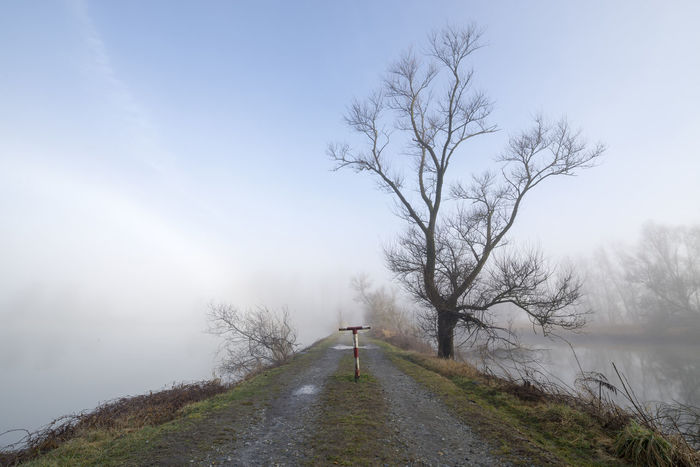 Tree on a lonely road surrounded with water in a foggy morning Beauty In Nature Blue Sky Branch Color Day Diminishing Perspective Fog Foggy Morning Grass Lake Landscape Lonely Road Misty Morning Nature No People Outdoors Power In Nature Road Sea Sorround Stone Road Tranquility Tranquility Tree Water