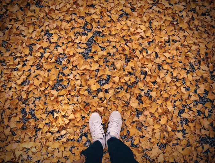 EyeEm Nature Lover Autumn Leaves Low Section Human Leg One Person Standing Shoe Human Body Part Real People High Angle View Personal Perspective Body Part Nature Lifestyles Leaf Autumn Directly Above Leisure Activity Day Plant Part Abundance Human Foot Autumn Mood