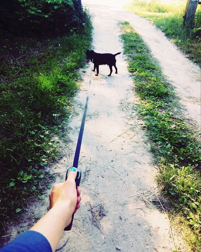 Walking With My Dog 🐶🐕