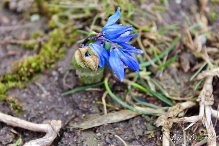 Spring18 Spring2018☀️ Spring☀️2018 The First Flower Nature Animal Themes One Animal Flower Animals In The Wild Fragility Animal Wildlife No People Close-up Day Focus On Foreground Outdoors Growth Insect Beauty In Nature Plant Purple Flower Head Freshness
