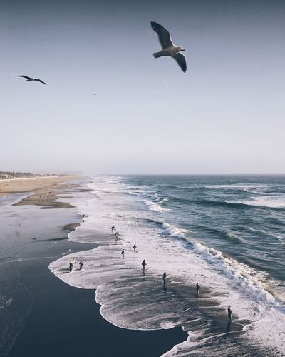 Birds Flying Over Sea At Beach