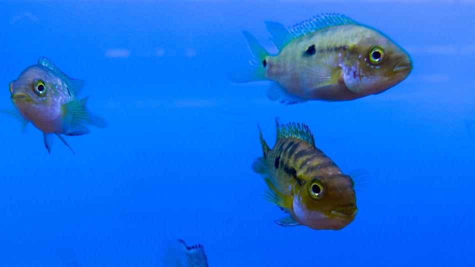 Aquarium Blue Fish No People Petstore Swimming Water