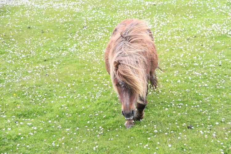 Pony on grassy field