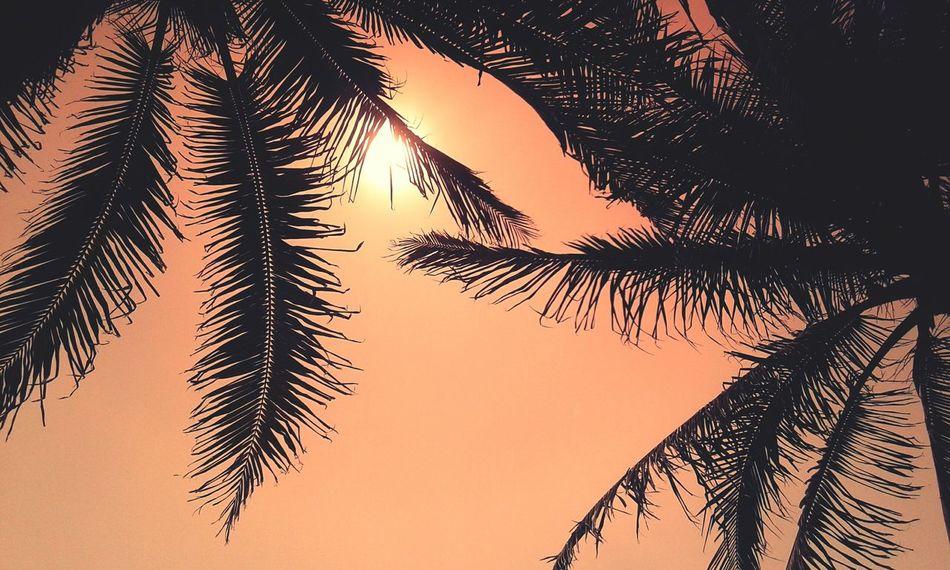 Palm Tree Sun Sunlight Sunset Palms Beach Beach Sunset Miami Miami FL Usa 🇺🇸☀️ Sky Tree Orange Sky