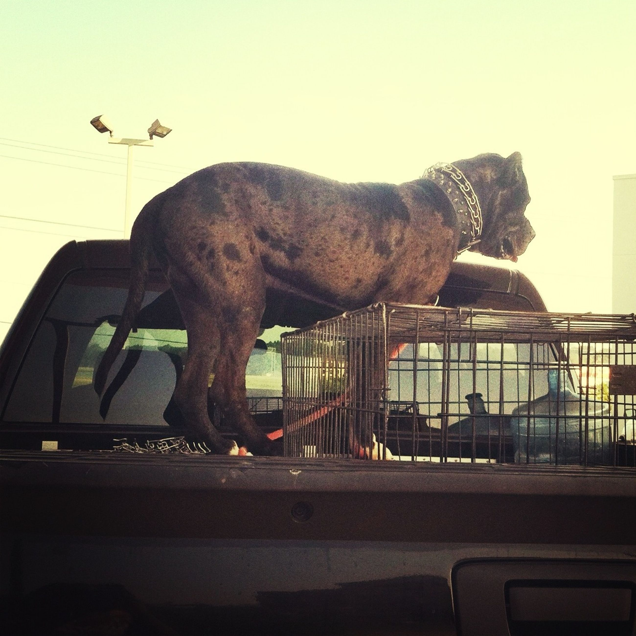 animal themes, one animal, horse, clear sky, built structure, architecture, domestic animals, building exterior, low angle view, mammal, side view, transportation, animal representation, wildlife, statue, outdoors, no people, sculpture, day, sky