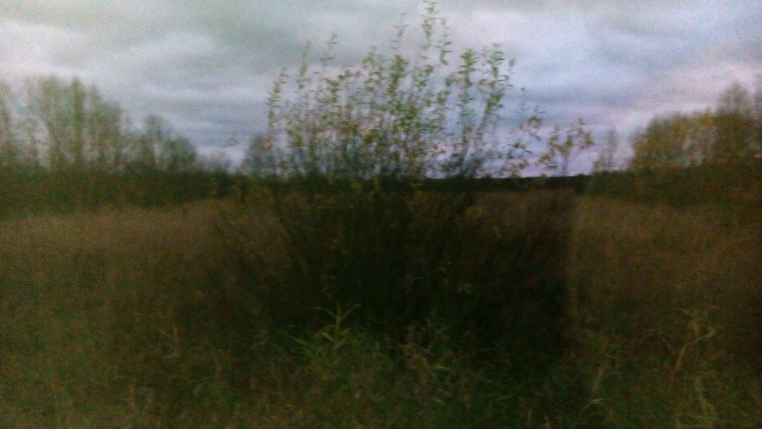 Tranquil Scene Scenics Growth Tranquility Nature Landscape Field Sky Beauty In Nature Plant Non-urban Scene Cloud - Sky Day Outdoors Focus On Foreground No People Remote Growing Grass Area Foggy