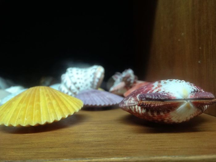 Shells on display. Marine Seashell Nature Still Life Animal Themes No People Table Close-up Indoors  Animal Shell Selective Focus Shell Shells SHELLFISH  Animal Wildlife Focus On Foreground Day Display Display Cabinet Sea Life