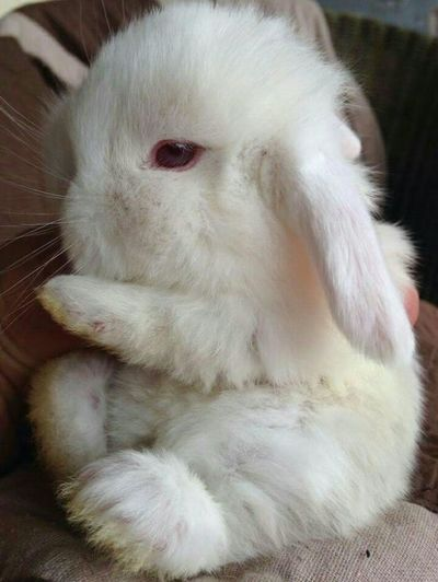 Cute Pets Animal Themes Baby Rabbit Blanc Bébé Lapin Cute Lapin Lapin Blanc Mignon One Animal Pets Rabbit White