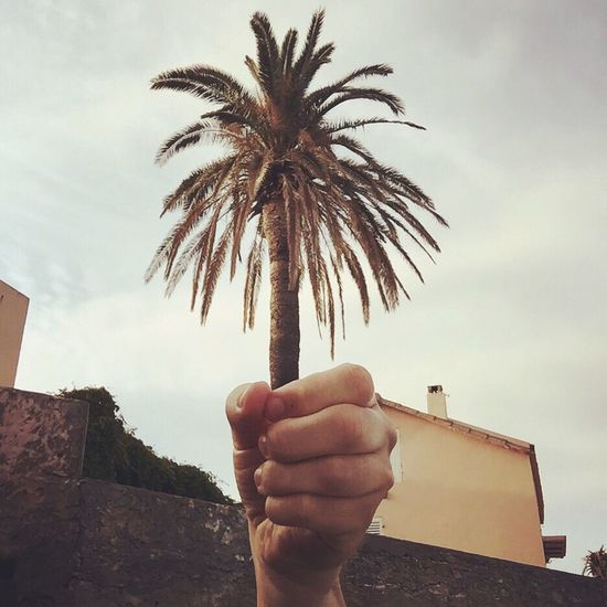Cut And Paste The palm of my hand Palm Palmtree Corsica Corse