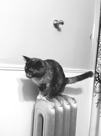Blackandwhite Cat Bathroom