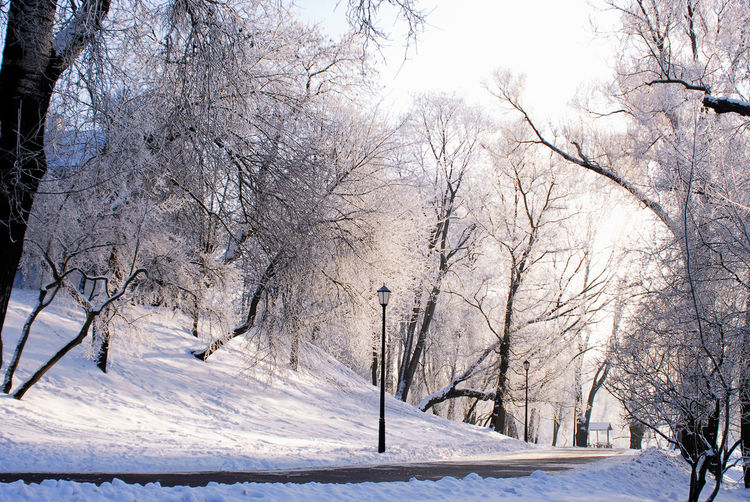 Minsk, Loshica Park Frozen Snow ❄ Winter Beauty In Nature Cold Temperature Nature Outdoors Weather