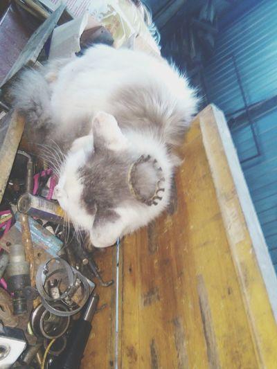 Помошница😄 Indoors  High Angle View Day No People Domestic Animals Close-up Mammal Cat Queen Спасибо👼 Россия😍 2017