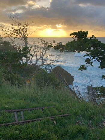 Stairway EyeEmSelect Puerto Rico Nature Tranquil Scene Tranquility Beauty In Nature Sunset Sky Scenics Grass No People Tree Water Sea Cloud - Sky Outdoors Growth Beach Day EyeEmNewHere