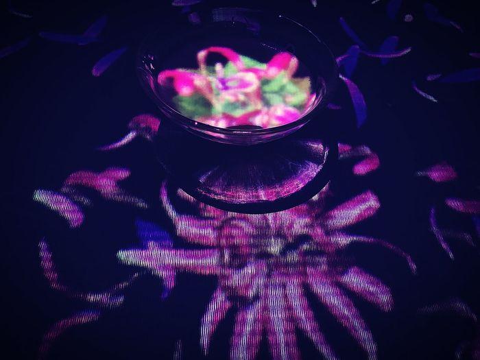 High angle view of illuminated purple lights on plant