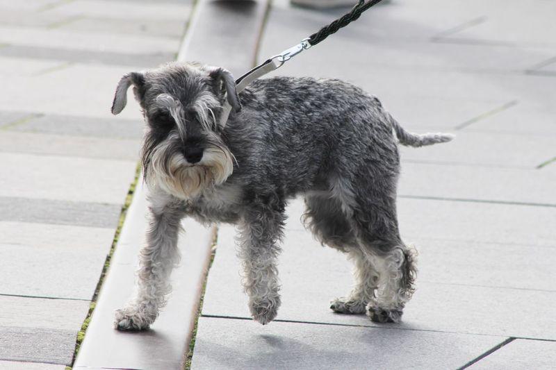 Dog in the city Dog EyeEm Selects Citydog