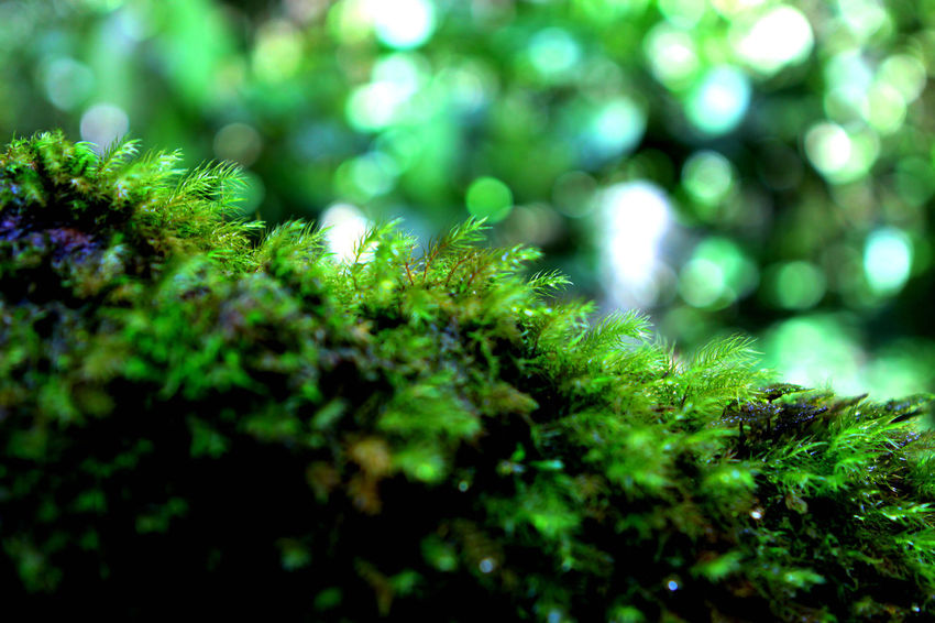 Moss Deceptively Simple Moss Mossyforest Huntingseason Travel Photography Nature Photography Beautiful Place Beautiful Nature