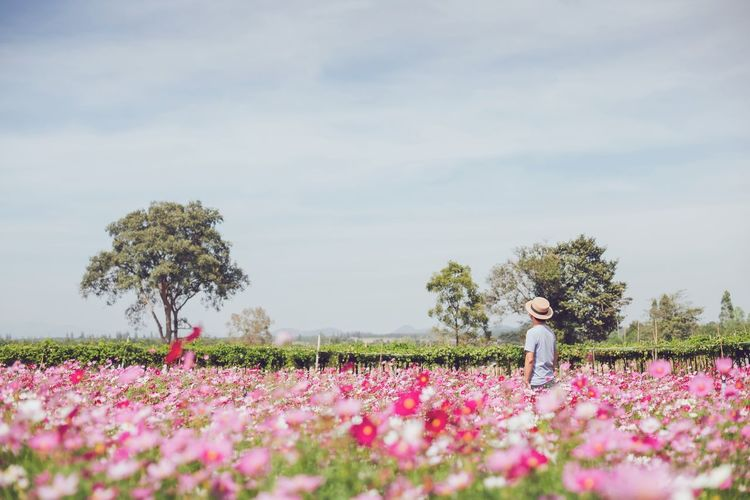 Woman standing by pink flower on field against sky