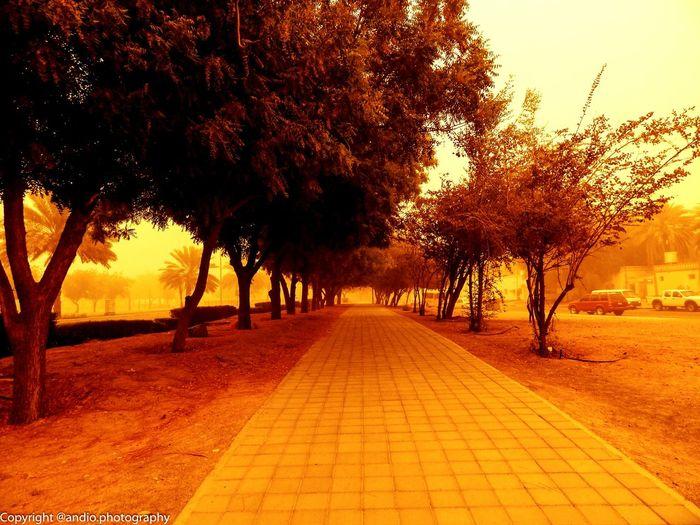 Street Streetphotography Park Sepia Sidewalk Duststorm Dusty Sandstorm No Filter No Filter, No Edit, Just Photography