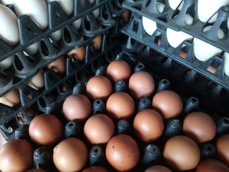 EyeEm Selects Abundance Large Group Of Objects Indoors  Full Frame Egg Carton Chicken Eggs