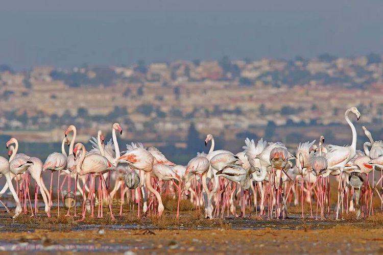 Pink Flamingos Alicante Unknown Author