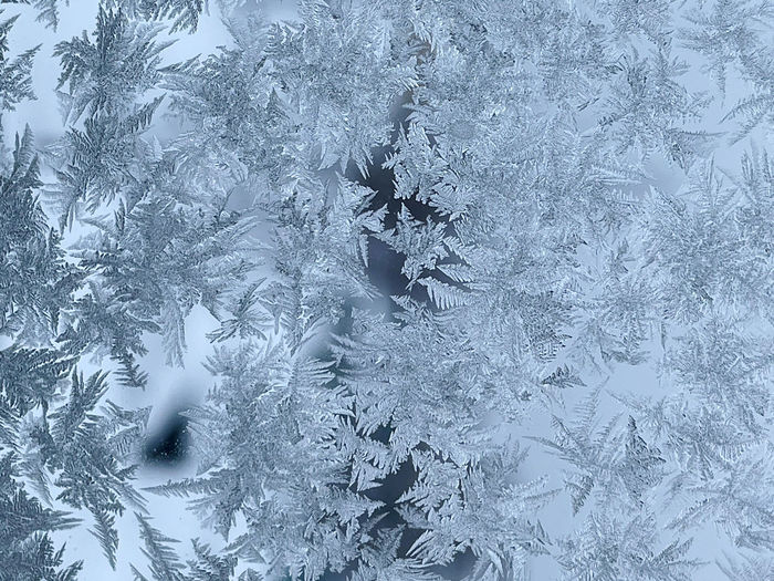 Close-up of snowflakes on frozen tree