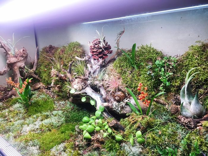 Plant Growth Nature No People Terrarium🍀 Tilandsia Orchid Flower