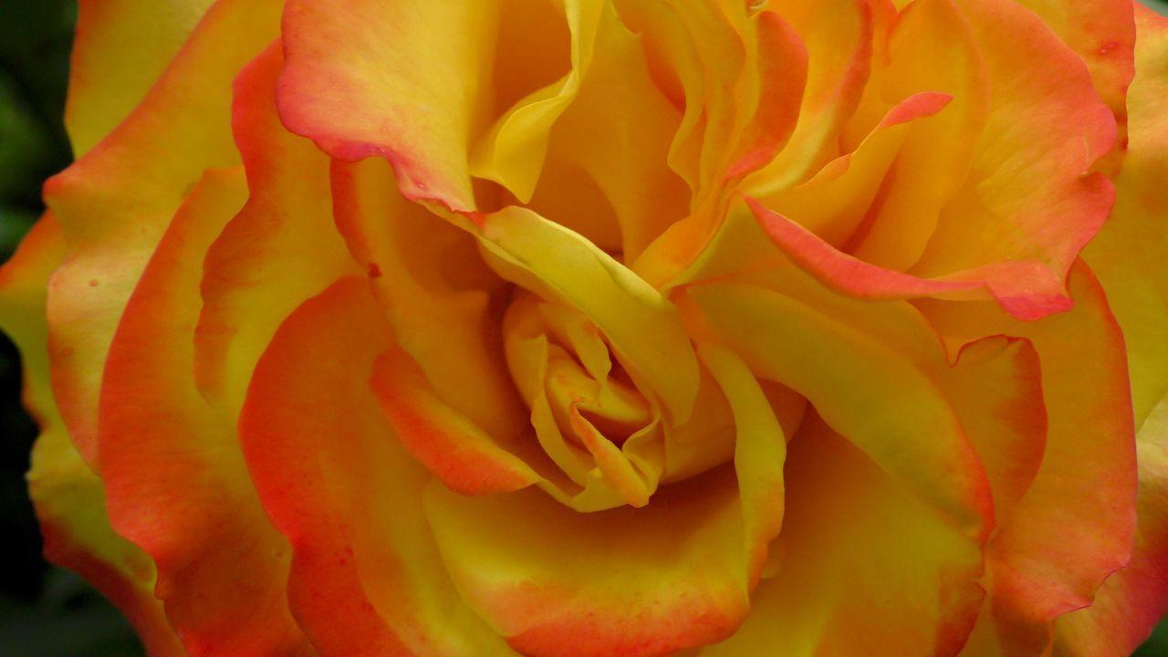 FULL FRAME SHOT OF YELLOW ROSE FLOWER