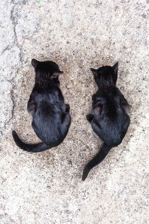two black cats sit on the ground Black Cat Sitting Black Cats Cat Cats Two Animals Two Cats Two Cats On The Floor