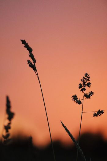 EyeEm Selects Plant Sunset Sky Growth Nature Silhouette Beauty In Nature No People Tranquility Orange Color Outdoors Focus On Foreground Close-up Tree Scenics - Nature Tranquil Scene Day Sunlight Clear Sky