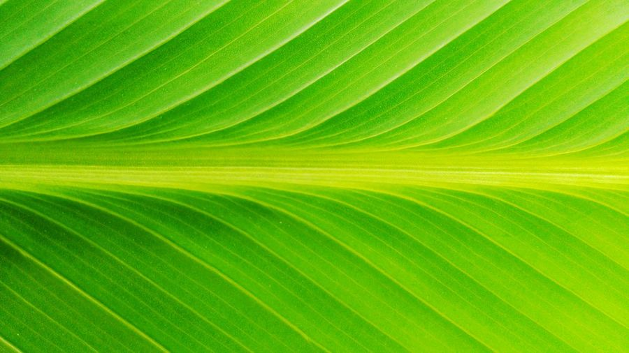 Leaf Backgrounds Green Color Nature Textured  Full Frame Close-up Growth Pattern Tree Frond No People Plant Day Outdoors Complexity Palm Tree Freshness Beauty In Nature Thailand Photos