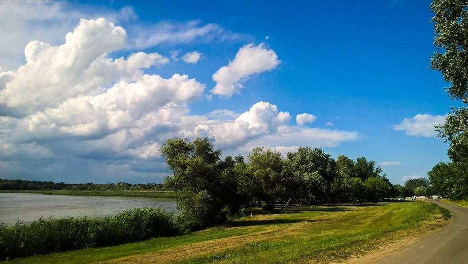 """""""All I ever needed"""" Tree Cloud - Sky Nature Day Sky Tranquility Outdoors No People Blue Grass Landscape Beauty In Nature Scenics Forest Water Beuty Of Nature Lake Tisza Lake View Sunlight Nature Reflection EyeEm Nature Lover Lakeview Nature Photography Sommergefühle"""