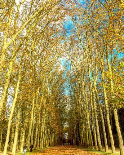 Nature Autumn Yellow Landscape Valley осень осенние листья опавшие листья пейзаж Park Versailles Trees Forest