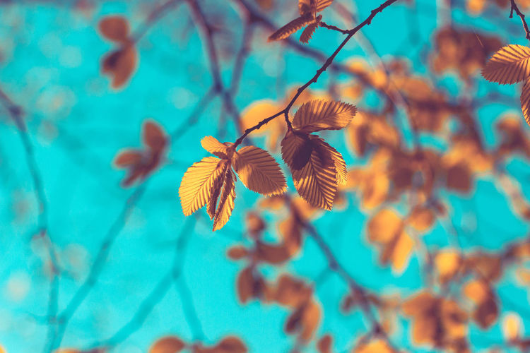 Close-up of leaf against blurred background
