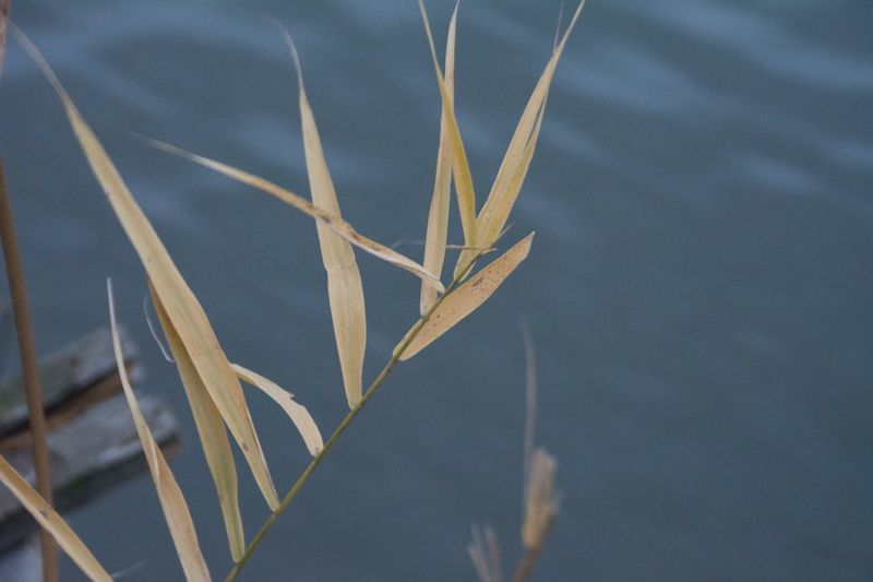 Close-up of plant by lake