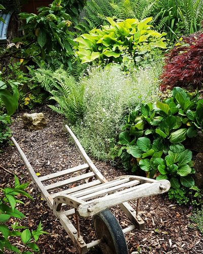Garten Impression Garden Photography Nature Home Sunlight High Angle View Grass Plant Life Backyard Growing