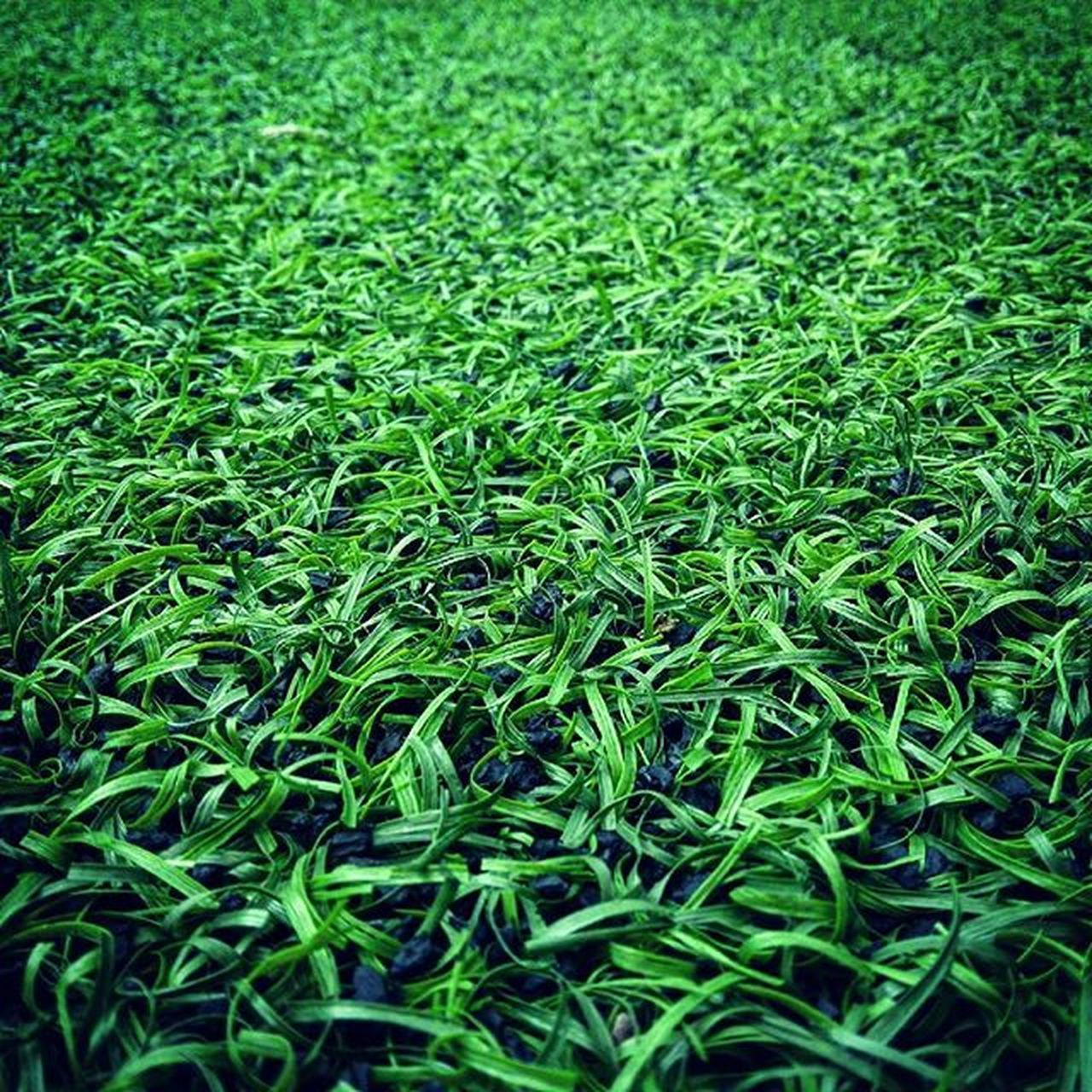 grass, green color, full frame, field, backgrounds, no people, nature, day, outdoors, close-up