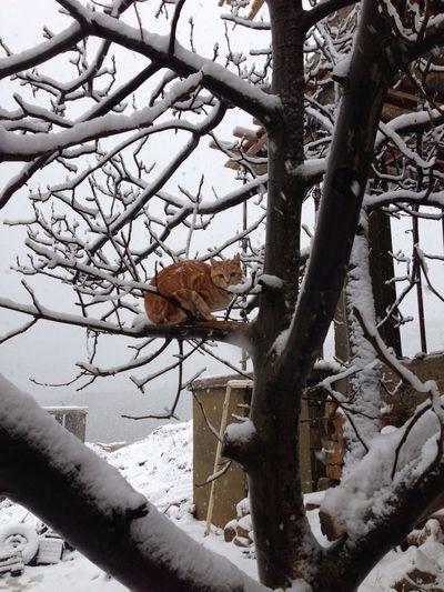 Cat + Snow