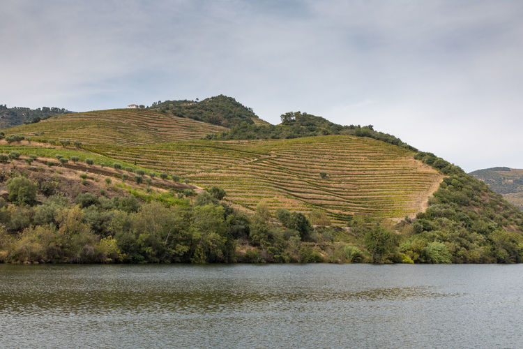 Douro river Portugal surrounded by hillside vineyards Douro  Portugal Beauty In Nature Cloud - Sky Day Environment Idyllic Lake Land Landscape Mountain Nature No People Non-urban Scene Outdoors Plant River Scenics - Nature Sky Tranquil Scene Tranquility Water Waterfront