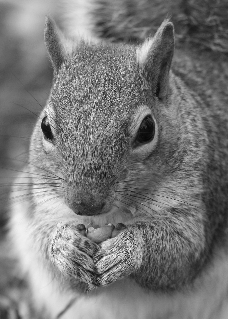 animal themes, one animal, mammal, rodent, close-up, animals in the wild, animal wildlife, no people, pets, portrait, domestic animals, indoors, day, nature
