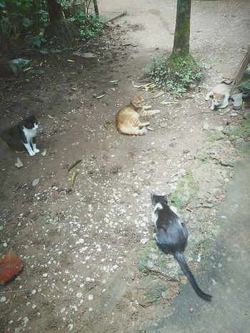 Cat Cats Catworld Cute Backyard Mybackyard Worlds Animals India Kerala