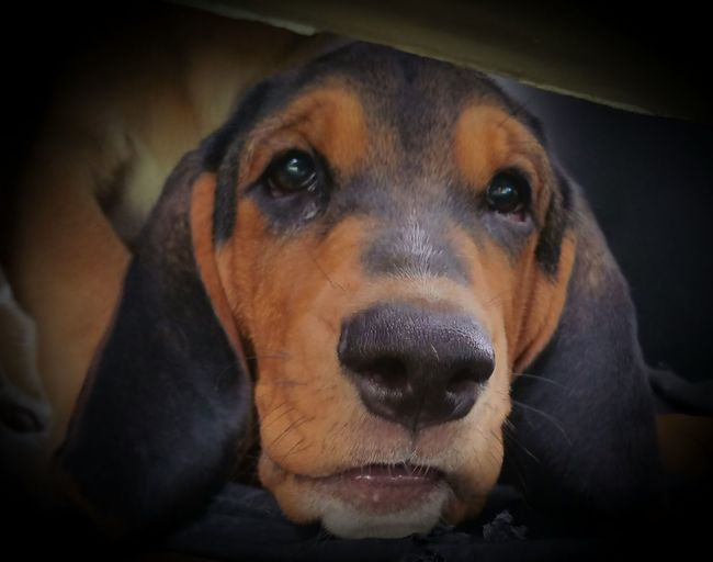 Hounddog Puppy Nature_perfection Dog Animal Puppy Love Puppy Cuddly Expression Simple Photography Simply Beautiful Check This Out This Week On Eyeem Natural Pattern Simple Beauty