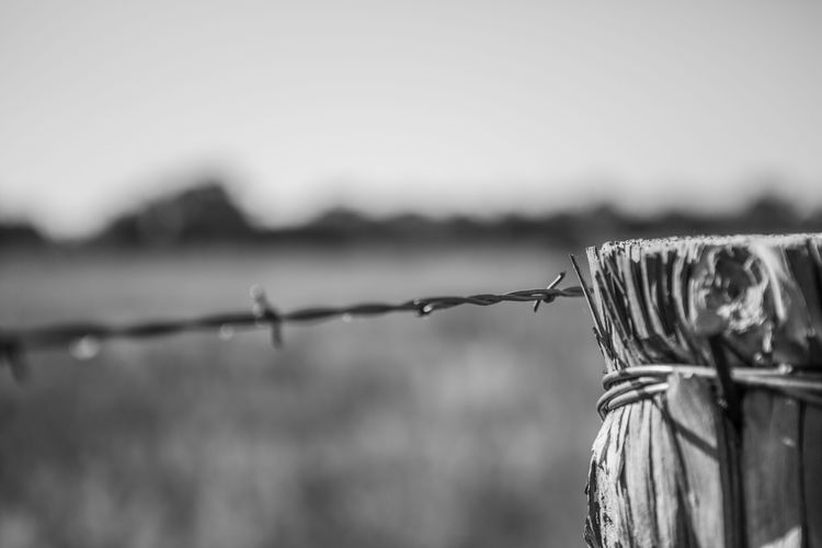 Barbed Wire Close-up Day Fence Focus On Foreground Metal Nature No People Outdoors Protection Safety Security Sky Wire