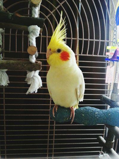 EyeEm Birds Lovebirds Valkparkiet Animal_collection