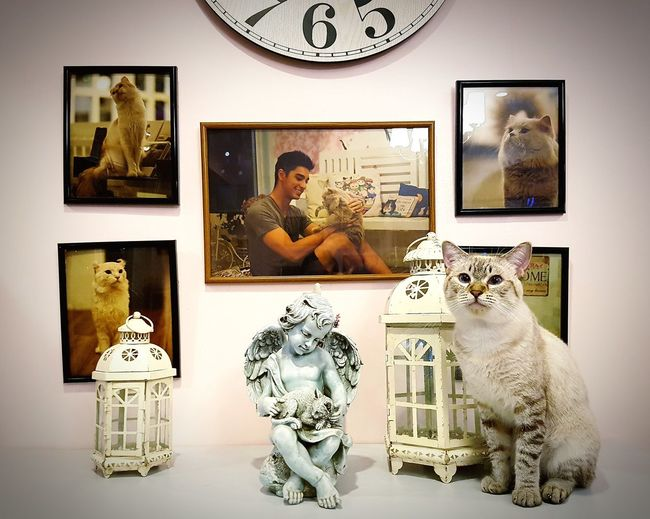 This cat knows how to pose infront of the camera. Picture Frame Antique Postcard Photograph Clock Old-fashioned Time Gift Indoors  Day Cat Cats Of EyeEm Cat Photography EyeEmNewHere