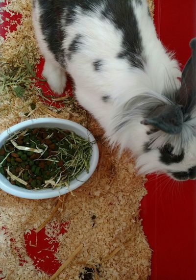 Taking Photos Check This Out EyeEm Gallery Pet Pet Photography  Rabbit Home Is Where The Art Is Animals Bunny  EyeEm Best Shots The Purist (no Edit, No Filter)Cute Cute Pets Rabbit Food Hay Cage
