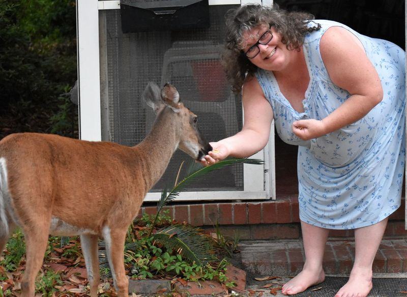 lady smiling feeding deer Jekyll Island Adult Adults Only Animal Themes Bonding Care Casual Clothing Childhood Day Domestic Animals Friendship Gray Hair Happiness Lady Smiling Feeding Deer Mammal Mature Adult One Animal Only Women Outdoors People Pets Real People Senior Adult Smiling Standing Young Adult