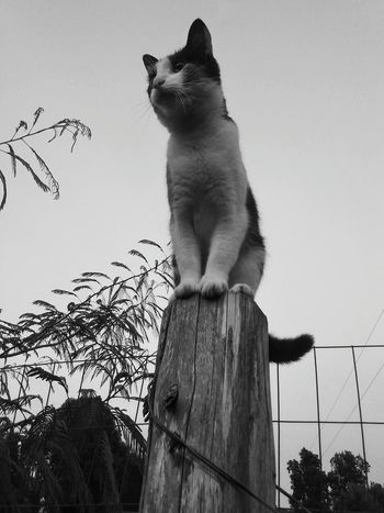 Cats Blackandwhite Blackandwhitephotography Fine Art Photography Artistic Nature Farm Pets Pet Photography  Summer Catlovers Animals