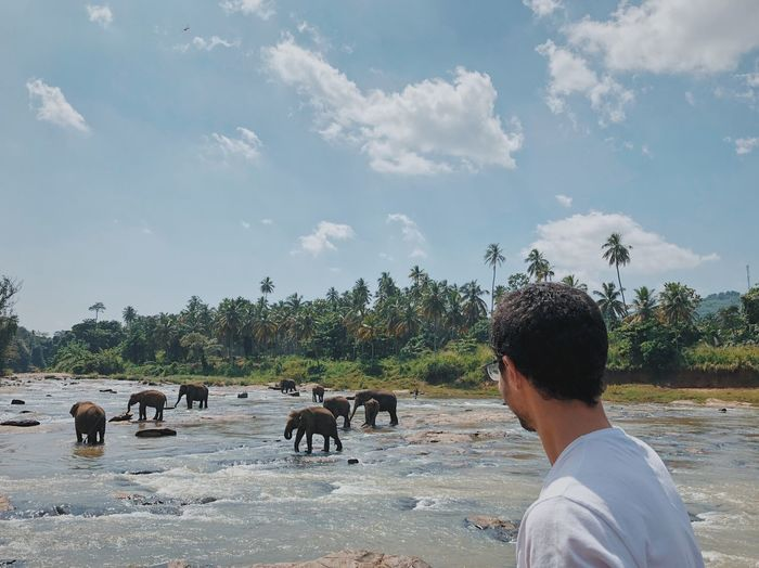 Man looking at elephants in river against sky